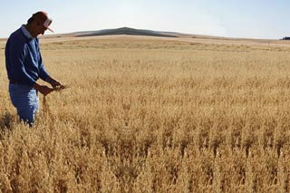 Photo of a wheat farmer.